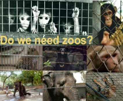 should animals be kept in zoos essay examples
