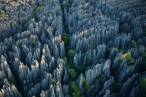 stone-forest-615