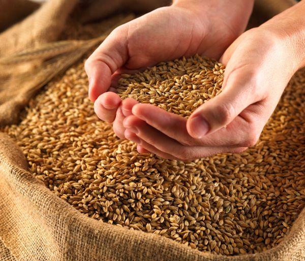 Food Security Bill 2013